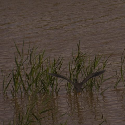heron-strie