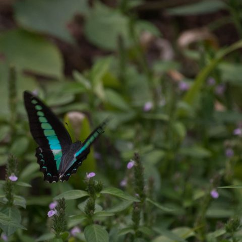 papillons-sp-7