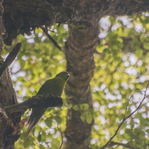 yc-parakeet-4