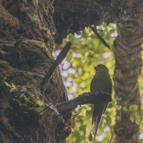yc-parakeet-5