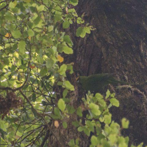 yc-parakeet-6