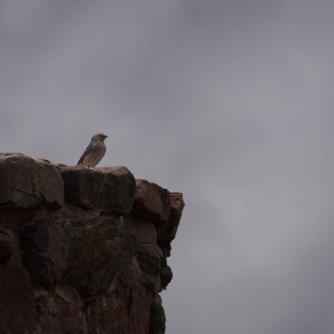 Oiseau-12