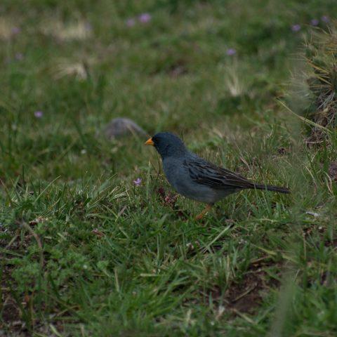Oiseau-21