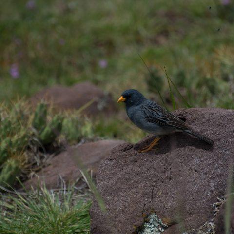 Oiseau-24