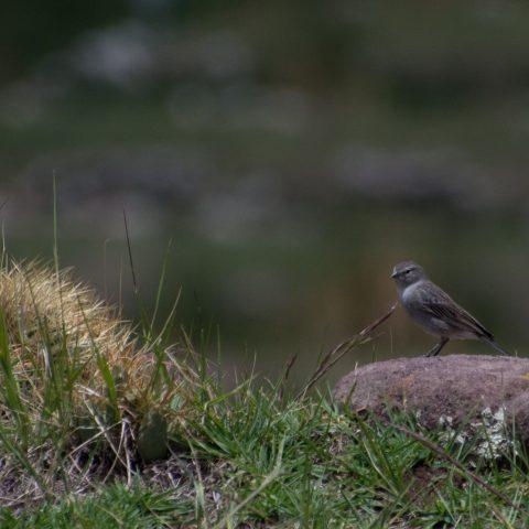 Oiseau-28