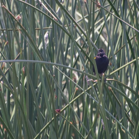 Oiseau-33