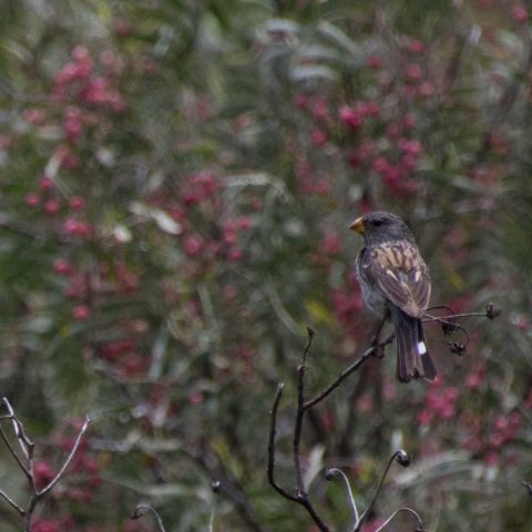 Oiseau-35