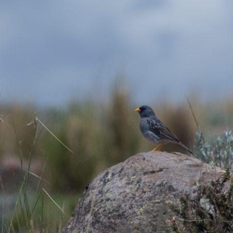 Oiseau-4