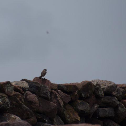 Oiseau-7