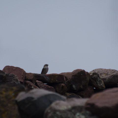 Oiseau-8