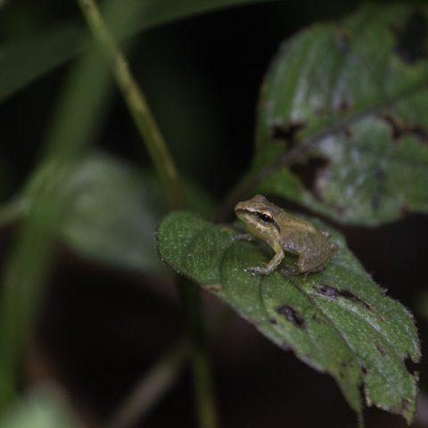 Amphibien-10