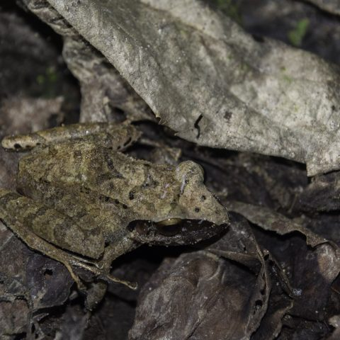 Amphibien-12