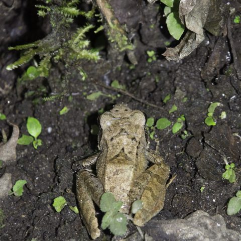 Amphibien-14