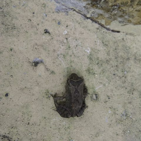 Amphibien-2