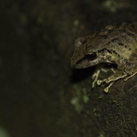 Amphibien-4