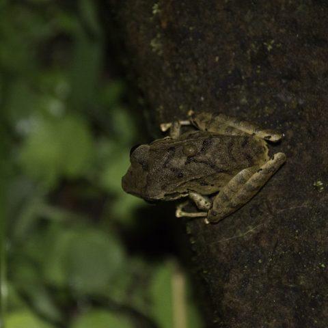 Amphibien-5
