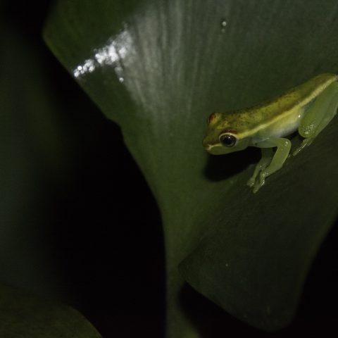 Amphibien-7