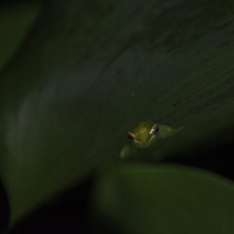 Amphibien-9
