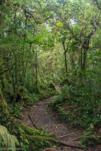 forêts de nuages Monteverde-2