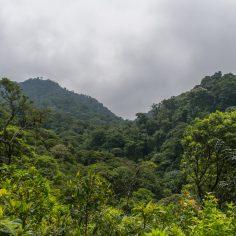 forêts de nuages Monteverde-3