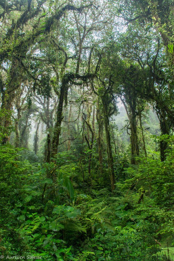 forêts de nuages Monteverde