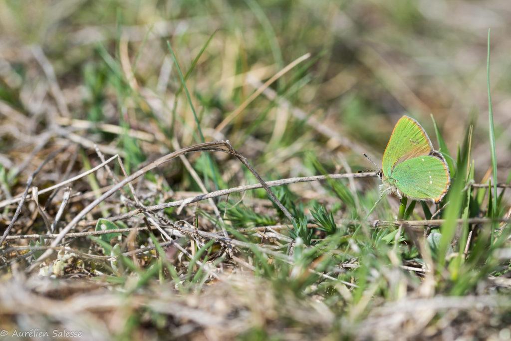 argus-vert-larzac
