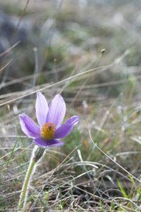 Flore du Larzac