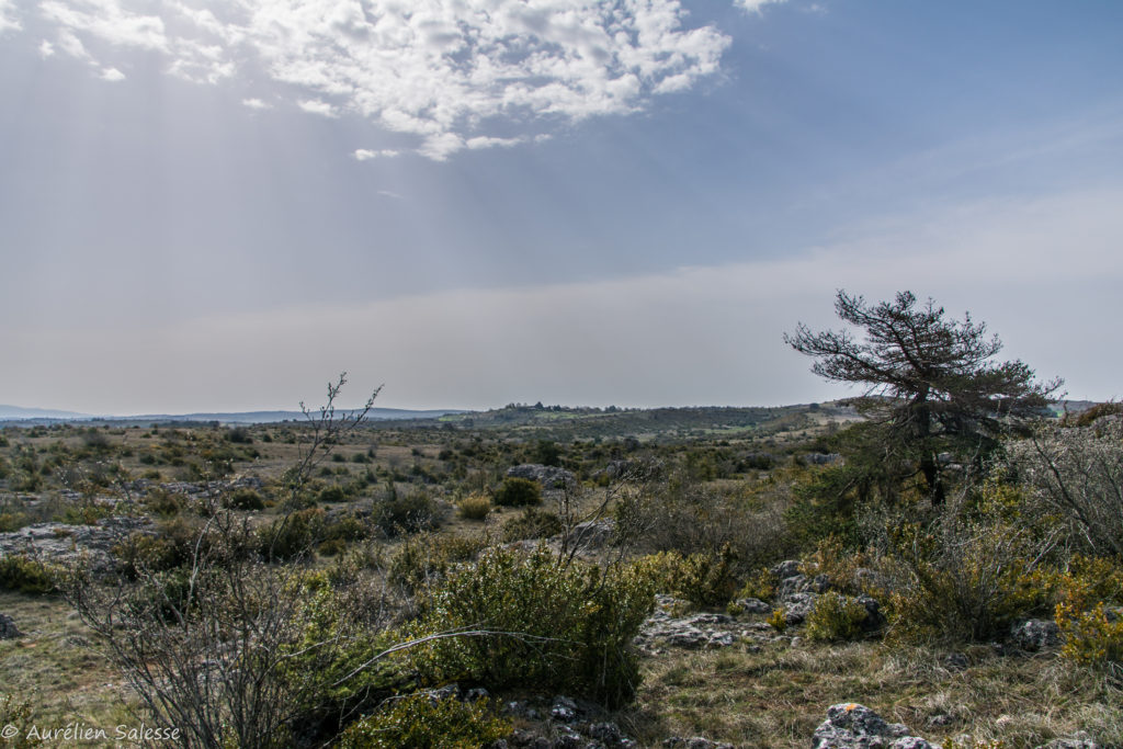 causse-larzac-paysage